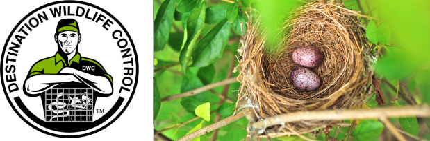 Birds build nests out of all types of materials